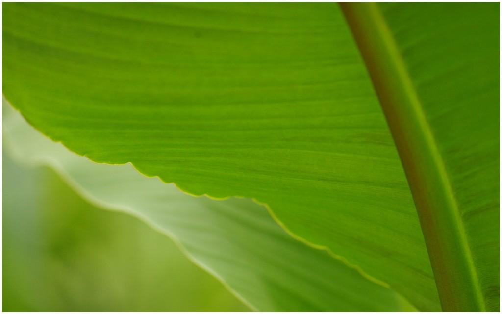 1-Orchideeen8