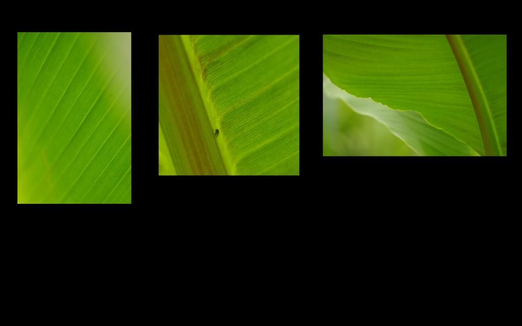 4-Orchideeen3