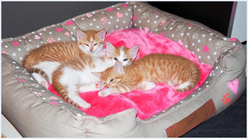 1-kittens-7-10