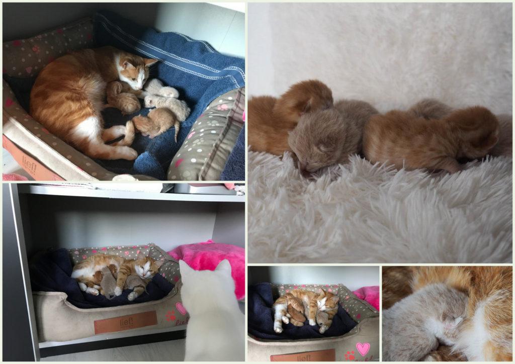 7-4 kittens